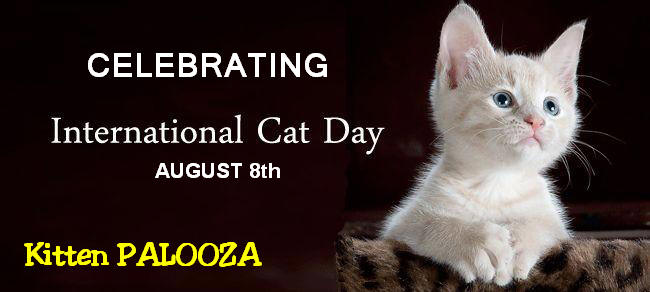 world cat day kitten palooza   partnering for pets